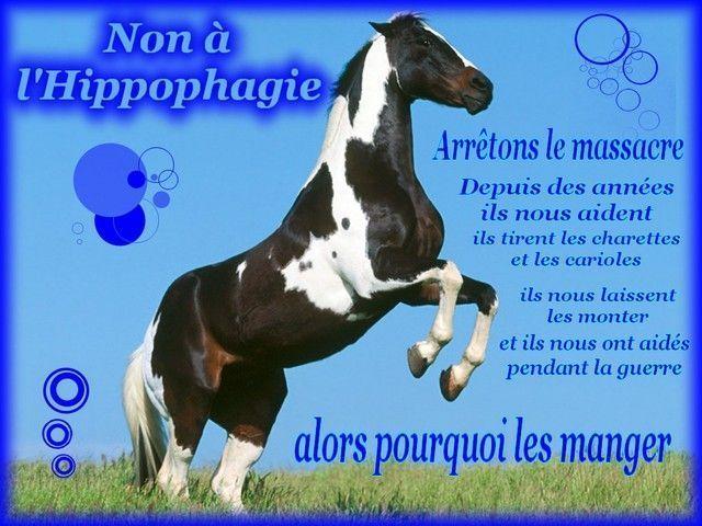 http://stopalhippophagie.s.t.pic.centerblog.net/ugj9sla1.jpg